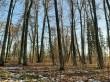 Jõgeva mõisa park. Foto: Raili Uustalu 02.03.2021. Võimsad ajaloolised pärnapuud pargi keskosa läänepoolsel alal (mitmes kohas kujundusvõte kaks puud koos).