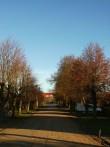 Vaade puiesteelt keskväljakule. Foto: L.Hansar. Kuupäev  15.11.2004