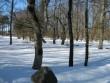 Vaade vabadussambast põhja poole pargialale Kalli Pets, 15.03.2010