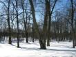 Kirikuaia lääneosa enne puude eemaldamist Kalli Pets, 15.03.2010
