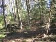Vaade kääpale. Kääpal kasvavad põlispuud raie käigus säilitati. Foto: Viktor Lõhmus, 28.04.2010.