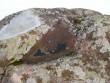 Kivi lohk, lumesulamise vesi ja mündid. Foto: Tarvi Sits, 30.03.2005.
