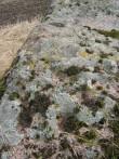 Lohud kivi pinnal. Foto: M. Abel, 30.04.2010.