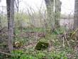 Kivikalme pind on tasane, ääristatud suurte pae- ja raudkividega, kivikalme servas kasvavad põlistammed. Foto: M. Koppel, 2010.