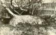 Lohukivi reg nr 10938. Foto: H. Joonuks, 1973.