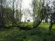 Lohukivi reg nr 10938, vale kaitsetahvliga ning vaade läänest. Foto: M. Abel, 13.05.2010.