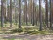 Pikk kääbas (50 m) Suure-Rõsna külas. Foto: Viktor Lõhmus, 14.05.2010.