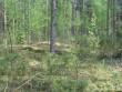 Vaade pikale kääpale kalmistu lõunaküljel, metsateest lõunasse. Puid peal kasvamas vaid mõned, seega vaadeldav. Foto: Viktor Lõhmus, 14.05.2010.