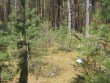 Rõsna küla. Kõver kääbas. Kääpal kasvavad kadakad, suuri puid vähem. Foto: Viktor Lõhmus, 14.05.2010.