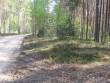 Pikk pööramisega kääbas metsatee ääres. Foto: Viktor Lõhmus, 14.04.2010.