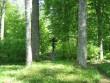 kalmistu nimega rist, mida raamib 4 põlispuud 21.05.10