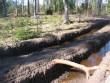 Kalme ümbrus pärast metsa väljavedu. Foto: Ulla Kadakas, 17.04.2005.