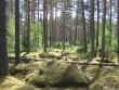 Rõsna küla 11 kääbast: Läbi kaevatud 8 tükki. Foto: Viktor Lõhmus, 28.08.2011.