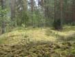 Vaade pikale kääpale Rõsna küla endine Toomassare talu. Metssea kahjustused kääpa lähedal. Foto: Viktor Lõhmus, 28.05.2010.