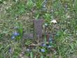 Kadrina kirikuaed ja kalmistu, reg nr 5754. Vaade kirikuaias olevale ristile. Foto: A. Kaldam, 11.05.2010.