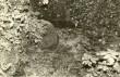 """Ohvriallikas """"Silmaallikas"""", """"Paranduseveeallikas"""" reg nr 10844. Foto: E. Väljal 27.09.1989."""