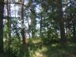 Vaade künkale ja esimesele kääpale koos tähisega. Foto: Viktor Lõhmus, 05.07.2010.