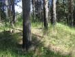 Kääbas asub hooldamata männituka keskel, maa ei kuulu katastrisse. Foto: Viktor Lõhmus, 05.07.2010.