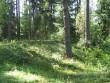 Vaade tee pealt kõige suuremale kääpale. Foto: Viktor Lõhmus, 05.07.2010.