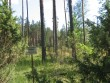 Vaade kääpa tähisele, millest tagapool asub üksik kääbas. Foto: Viktor Lõhmus, 05.07.2010.