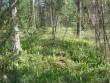 Vaade üksikule kääpale metsa alal. Foto: Viktor Lõhmus, 05.07.2010.