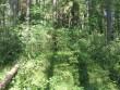 Vaade kääpale Tuderna jõe ääres. Tihe mets hoiualal segab kääpa vaatlemist. Foto: Viktor Lõhmus, 05.07.2010.