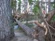 Vainupea kalmistu reg. nr 5798. Vaade tormikahjustustele. Foto: Ingmar Noorlaid, kuupäev 09.08.2010