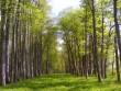 Autor S. Konsa  Kuupäev  24.05.2005