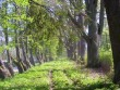 puude rida 19.s kõrval rida 18.s. II v.  Autor S. Konsa  Kuupäev  24.05.2005