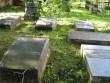 Carl (Karl) Timoleon von Neffi (1804-1877) haud, reg. nr 5757. Foto; Ingmar Noorlaid, kuupäev 26.08.2010