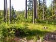 Kalme asub maanteest 200 m kaugusel kõrgel künkal. Foto: Ulla Kadakas, 21.06.2005.