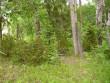 Vaade metsatukale, kus peaks asuma kalmistu (GPSi näit). Foto: Tarvi Sits, 29.06.2005.