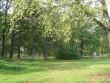 Avanduse mõisa park, 15625 vaade parki lõunapoolsest küljest  pilt: Anne Kaldam  aeg: 24.09.2010
