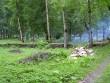 Pargi puhastamine võsast  Autor Tarvi Sits  Kuupäev  26.07.2005