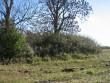 Ohvrikivi asukohale vaade põllult loode-lääne poolt. Foto: Kalli Pets, 01.10.2010.
