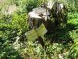 Tähis loodeosas kuuskede all. Foto: Kalli Pets, 01.10.2010.