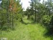 Kivikalme asub noorendikuga kaetud metsatee ääres, vaade metsateelt ida suunas. Foto: M. Koppel, 2010.
