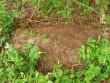 Vaade ohvrikivile reg nr 11775 Pärnu-Lihula mnt ääres. Foto: Karin Vimberg, 27.05.2009.