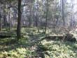 Rada arvatavast mälestise asukohast metsatee poole põhja suunas. Foto: Kalli Pets, 05.11.2010.