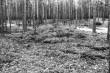Kääbas - lõunast. Foto: M. Pakler, 05.05.1981.