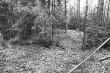 Kääbas reg nr 13617 (40-k). Foto: M. Pakler, 10.10.1979.