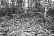Kääbas reg nr 13618 (41-k). Foto: M. Pakler, 10.10.1979.