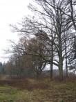 Linnamäe mõisa park. Foto Tõnis Taavet, 04.11.2010.