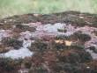 Lohukivi reg nr 10475. Foto: Tõnno Jonuks, 14.09.2010.