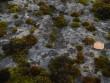 Lohukivi reg nr 10390. Foto: Tõnno Jonuks, 01.11.2010.