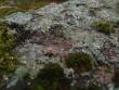 Lohukivi reg nr 10416. Foto: Tõnno Jonuks, 01.11.2010.
