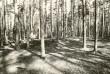 Kääpad. Foto: M. Pakler, 22.04.1980.