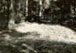 Kääbas - läänest. Foto: E. Väljal, 16.05.1985.