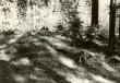 Kääbas - kagust. Foto: E. Väljal, 16.05.1985.