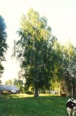 Ohverdamiskoht - lõunast. Foto: A. Sarv, 01.07.1997.
